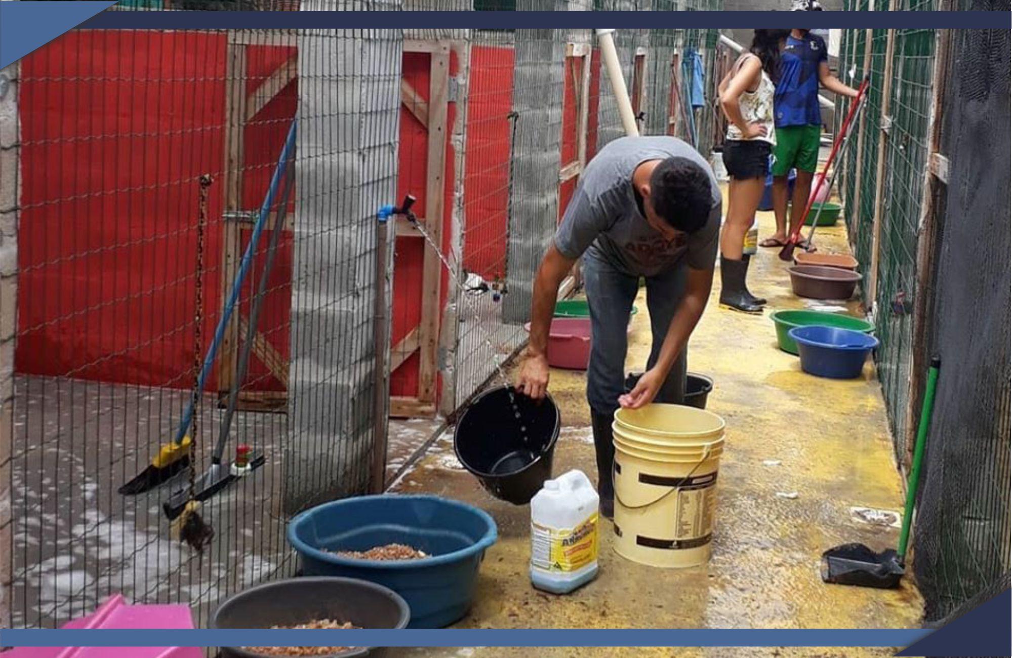 PREFEITURA FIRMA CONVÊNIO DE REPASSE DE RECURSOS PARA CUIDAR DE ANIMAIS ABANDONADOS